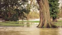 Flooded Oxford lawn.